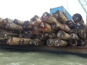 Kayu bulat dari hutan alam tanda tanda V-Legal