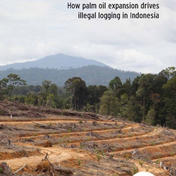 Licensing for Criminal Acts: What is the Expansion of Oil Palm to Encourage Illegal Logging in Indonesia