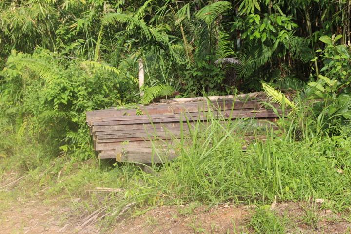 Rising Cases of Illegal Logging in Papua