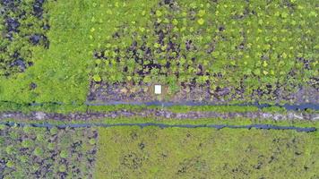 Palm Oil Plantation in Sebangau National Park