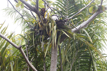 Orangutan population in Sebangau National Park is Endangered
