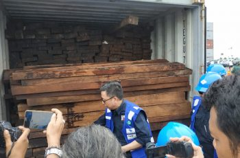 KLHK Law Enforcer Secures 384 Container of Illegal Timber from Papua Worth IDR 100 Billion