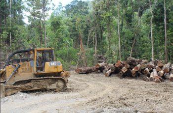 Gakkum KLHK Tahan Komisaris CV SBM Terkait Illegal Logging
