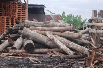 Timber Distribution and Trade Traceability Must Be Strengthened  to Ensure SVLK Credibility